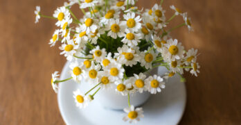 Chamomile | What Are The Proven Benefits of Chamomile Tea?