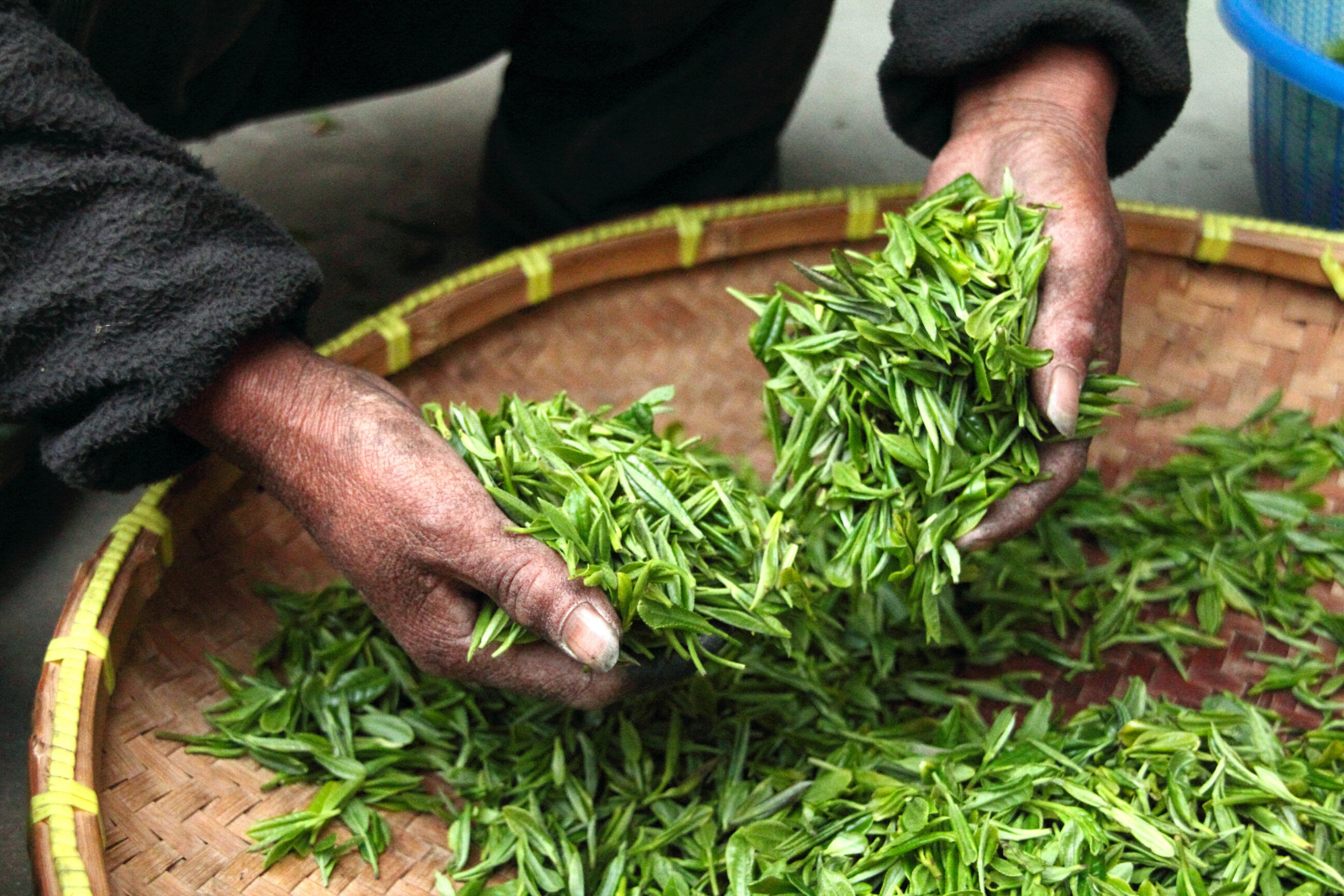 Tea Leaves | How to Brew Loose Leaf Tea: Everything You Need To Know
