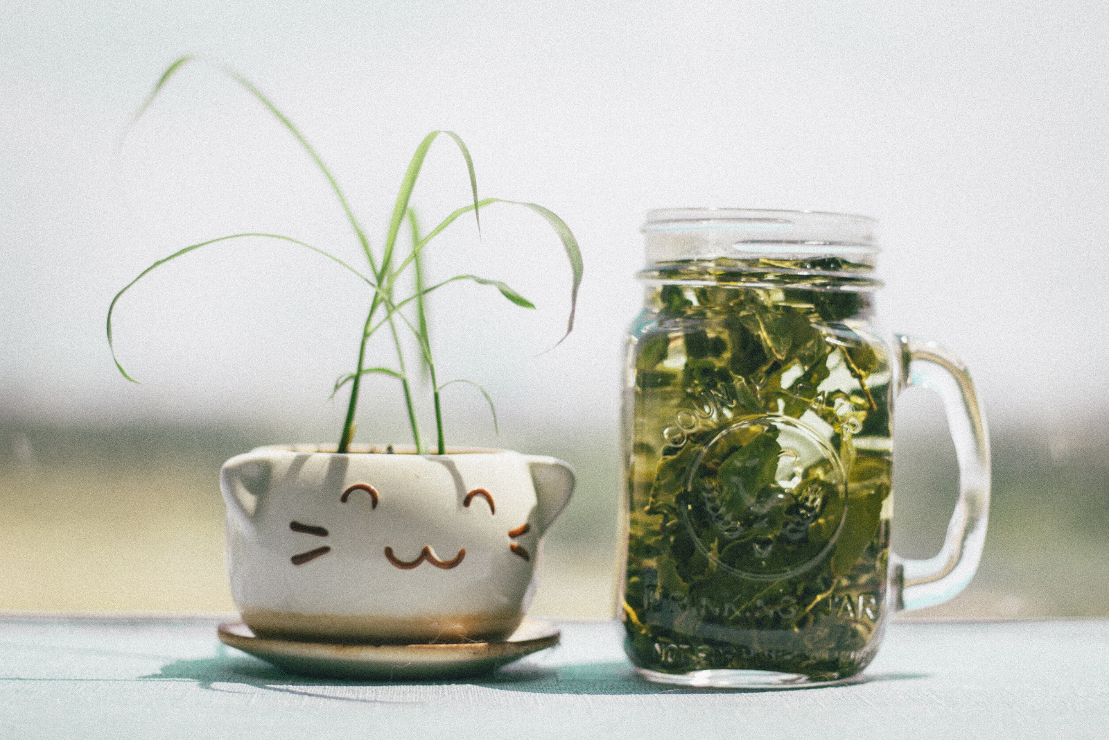 Mug and Small Plant | All Of The Matcha Green Tea Health Benefits, Explained